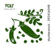 sketched vegetable illustration ... | Shutterstock .eps vector #392416048
