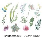 watercolor herbs  ranunculus ... | Shutterstock . vector #392444830
