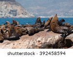 sea lion while swimming hout... | Shutterstock . vector #392458594