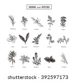 herbs and spices art eps wild... | Shutterstock .eps vector #392597173