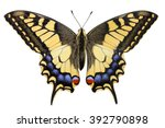 Swallowtail  Papilio Machaon ...
