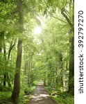 spring forest with sunbeam and... | Shutterstock . vector #392797270