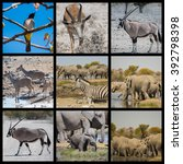 animals and desert landscape in ... | Shutterstock . vector #392798398