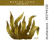 sea kelp. marine food | Shutterstock .eps vector #392799130
