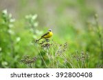 little yellow bird | Shutterstock . vector #392800408
