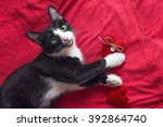 Stock photo romantic black and white young cat with a red heart is on the red background 392864740