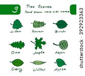Set Of Spring Hand Drawn Leaves ...