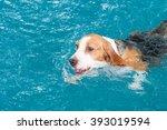 little beagle dog playing ball... | Shutterstock . vector #393019594