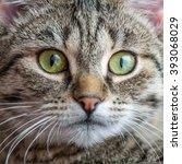 Stock photo beautiful cat portrait macro 393068029