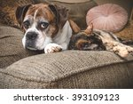 Stock photo old boxer dog and cat napping 393109123
