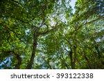 Tree Canopy Of A Tropical Rain...
