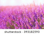 beautiful colors purple...   Shutterstock . vector #393182593