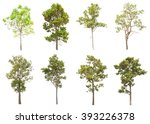 collection of isolated tree on... | Shutterstock . vector #393226378
