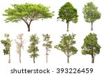 Stock photo collection of isolated tree on white background 393226459