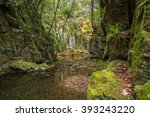 beautiful in nature the akame... | Shutterstock . vector #393243220