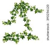 ivy vines | Shutterstock .eps vector #393256120