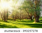 sunset in forest  sunlight with ... | Shutterstock . vector #393257278