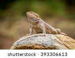 bearded dragon on a rock | Shutterstock . vector #393306613