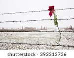 A Rose On The Barbed Wire Fenc...