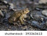 frog | Shutterstock . vector #393363613