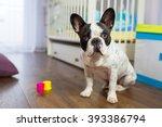 french bulldog sitting in baby...   Shutterstock . vector #393386794