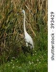 heron | Shutterstock . vector #393429