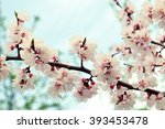 branches of a white flowering... | Shutterstock . vector #393453478