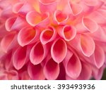 pink dahlia flower isolated on... | Shutterstock . vector #393493936