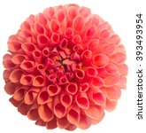 pink dahlia flower isolated on... | Shutterstock . vector #393493954