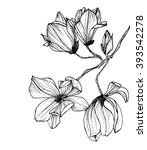 hand drawn graphic magnolia... | Shutterstock . vector #393542278