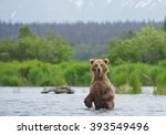 Grizzly Bear Standing In The...