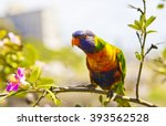 parrot on a branch in tree  ... | Shutterstock . vector #393562528