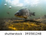 underwater shot of the fish ... | Shutterstock . vector #393581248