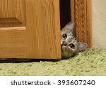 Stock photo curious cat looking between door funny curious grey cat looking straight to the camera green eyes 393607240