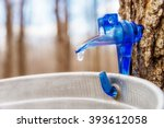 Maple Sap Dripping Into Bucket...