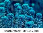 Beautiful Flowers In Various...