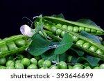peas | Shutterstock . vector #393646699