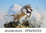 White Horse Jumps Out Of The...