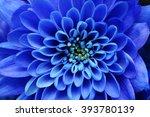 Close Up Of Blue Flower   Aste...