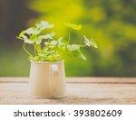 Green Leaf Clovers On Bucket ...