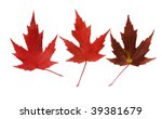 tree variety red  maple leaves... | Shutterstock . vector #39381679