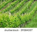 winery - stock photo