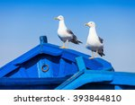 Seagull On The Fishing Boats I...