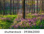 Purple Spring Flowers In A...