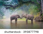 Asian Elephant In A Natural...