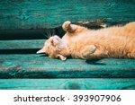 Funny Red Kitten Cat Sleeping...