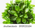 green house plant on a white...   Shutterstock . vector #393923104