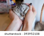 Funny Gray Cat In Female Hand
