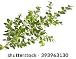 background with the sprigs of... | Shutterstock . vector #393963130