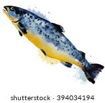 atlantic salmon salmo solar...   Shutterstock . vector #394034194